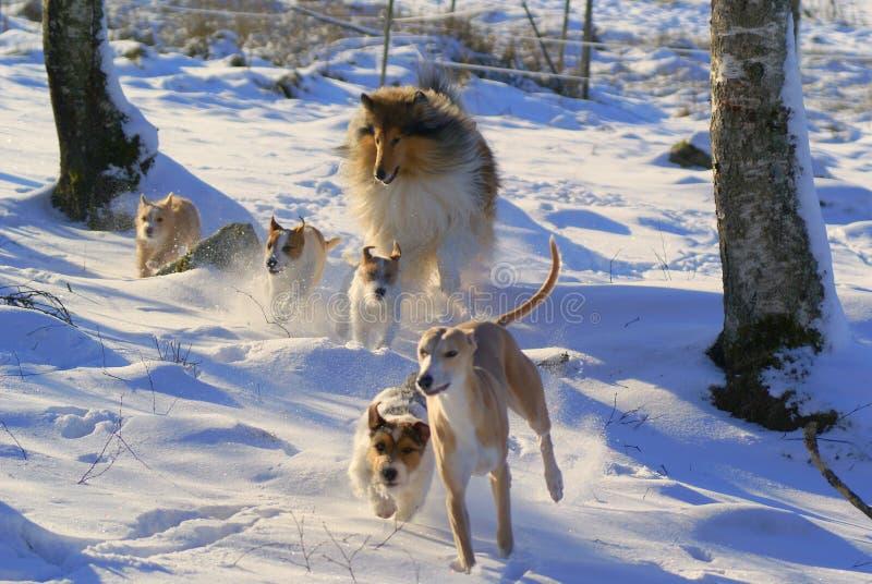 Cães felizes foto de stock royalty free
