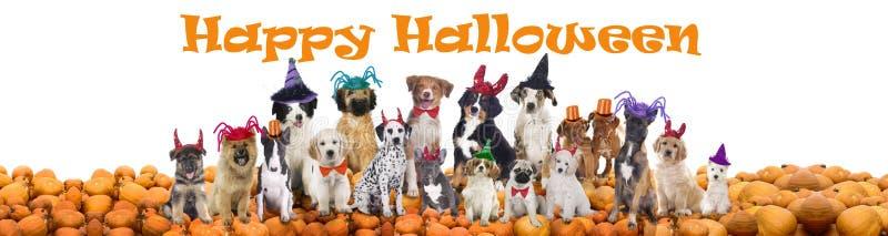 Cães felizes do Dia das Bruxas fotos de stock