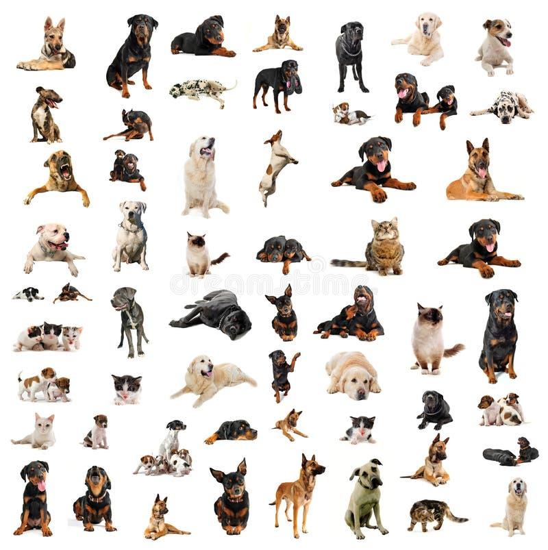 Cães, filhotes de cachorro e gatos foto de stock royalty free