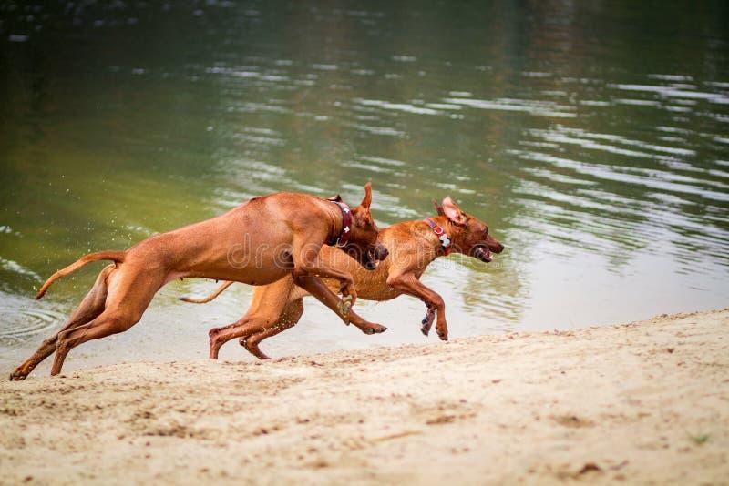 Cães fora foto de stock