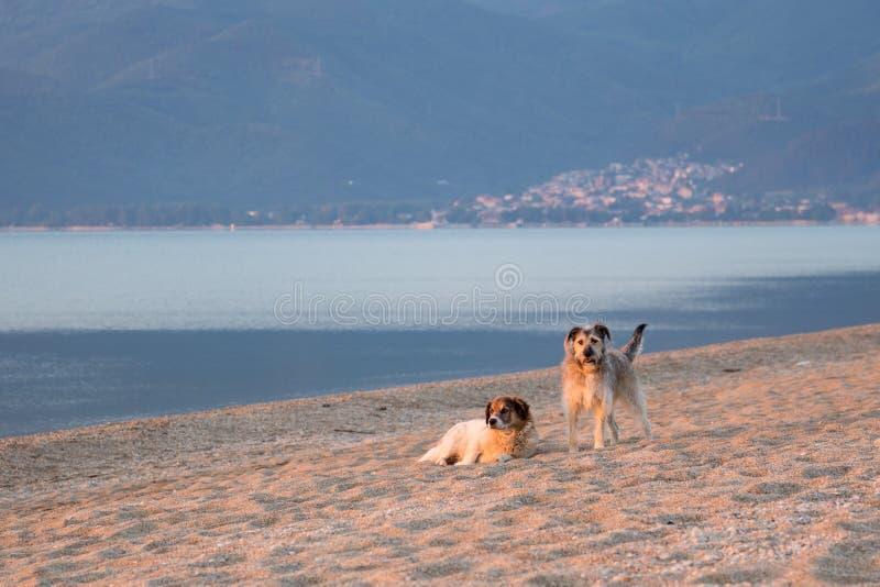 Cães na areia imagem de stock royalty free