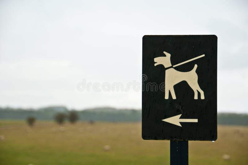 Cães na trela fotografia de stock