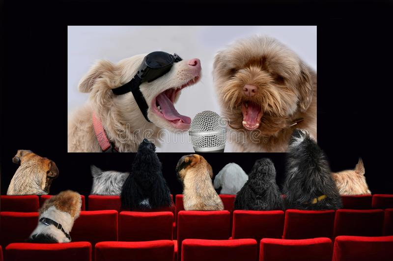 Cães no cinema que olha um filme da música fotos de stock