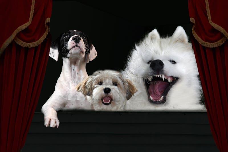 Cães no teatro Às vezes cantam alto imagem de stock royalty free