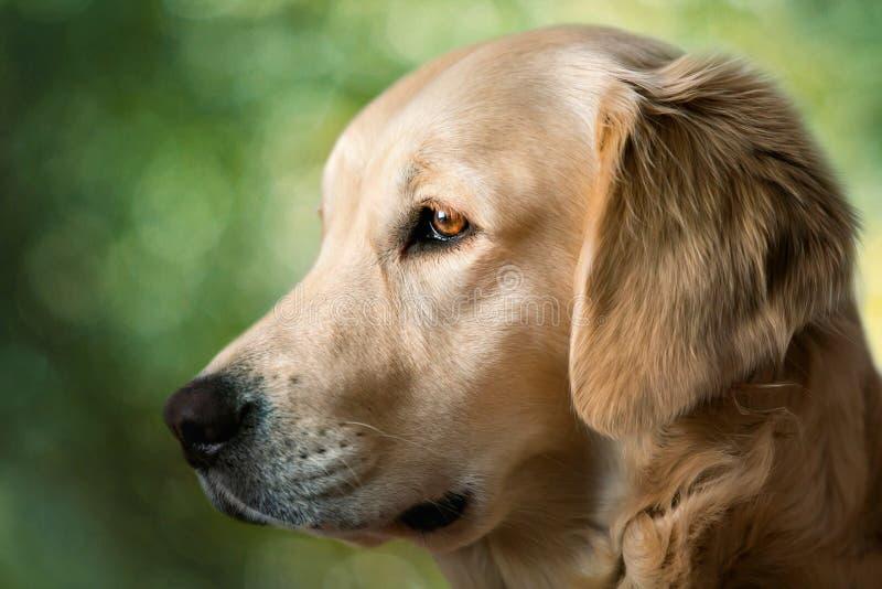 Cães novos da beleza do retrato fotografia de stock