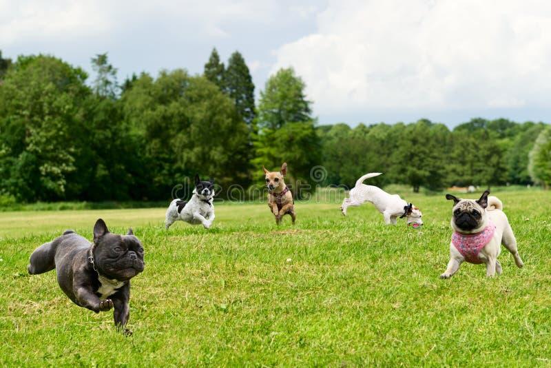 Cães pequenos no parque fotos de stock royalty free