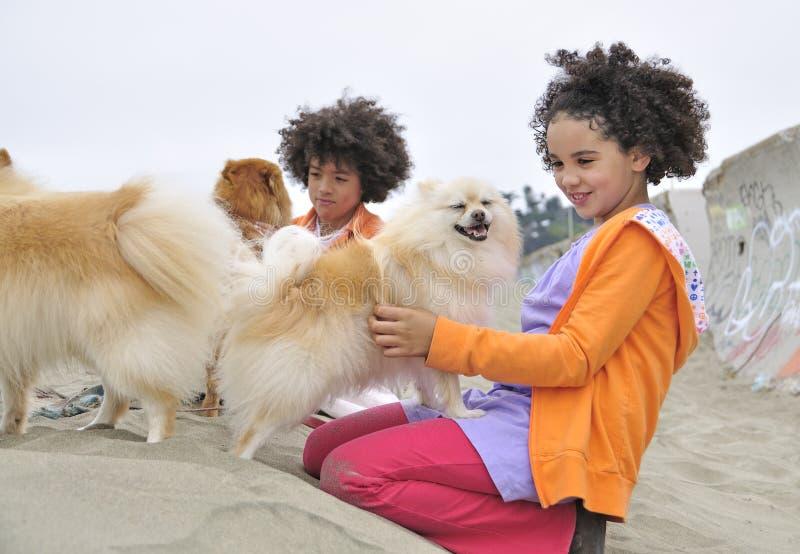Cães petting do menino e da menina na praia imagem de stock