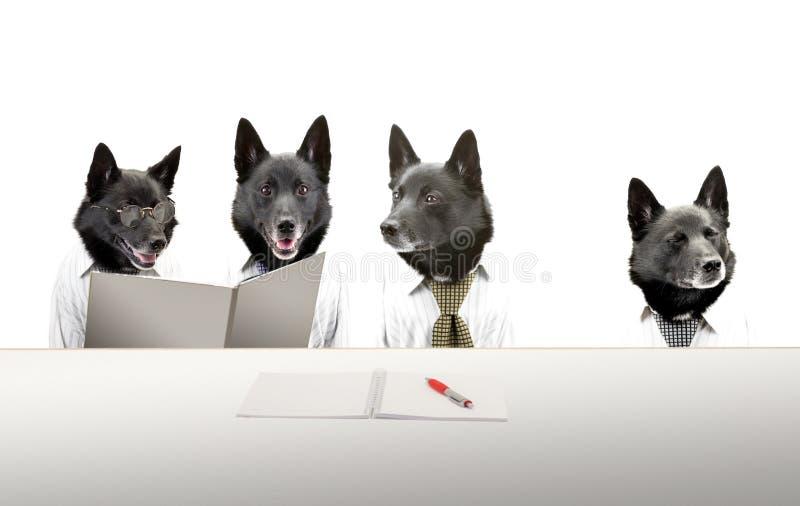 Cães na reunião imagens de stock royalty free