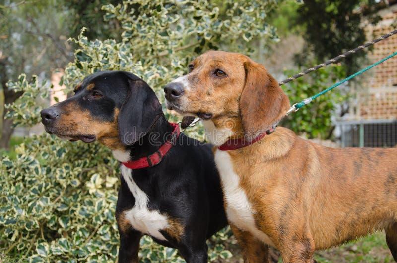 Cães que andam no parque fotografia de stock