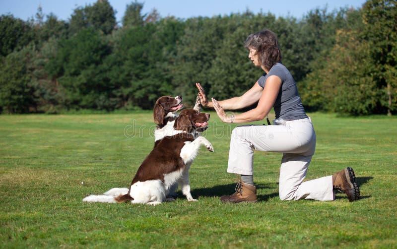 Cães que dão a elevação cinco à mulher fotografia de stock