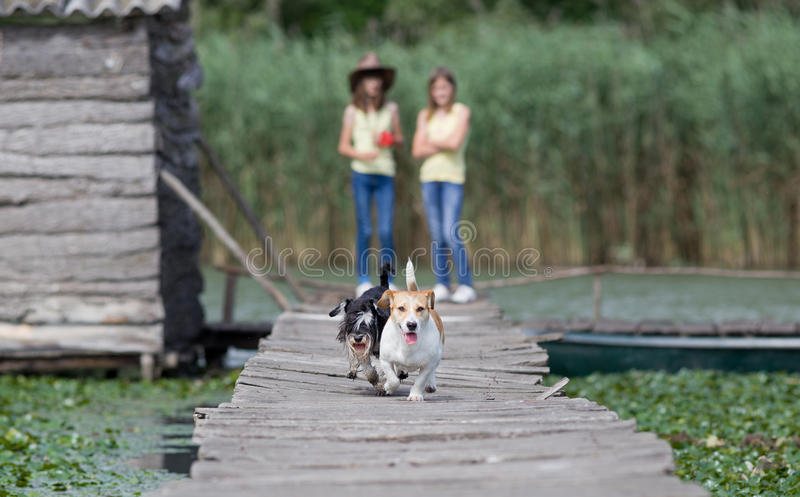 Cães Running imagem de stock royalty free