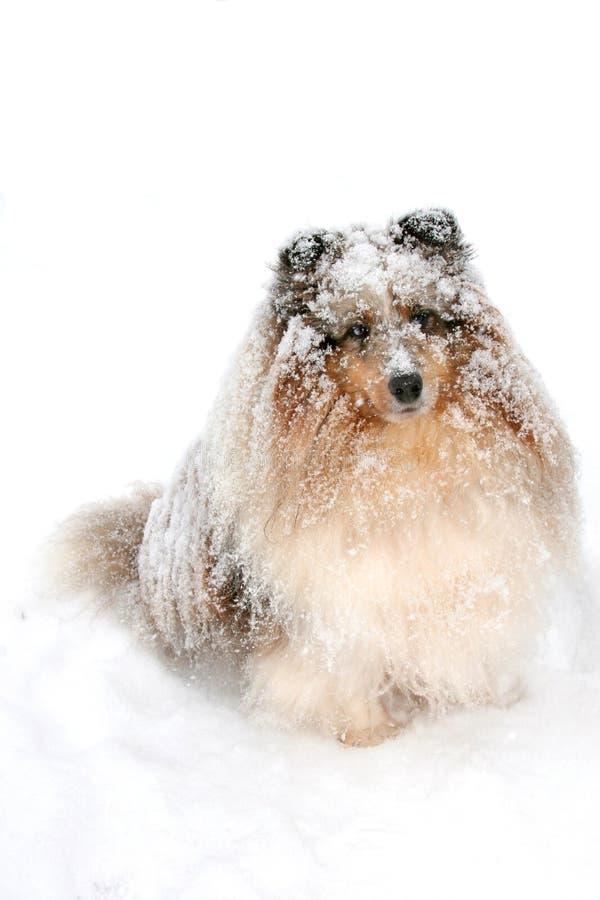 Cão 1 da neve fotos de stock royalty free