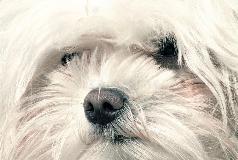 Download Cão foto de stock. Imagem de doce, olhos, pouco, cão, retrato - 543066