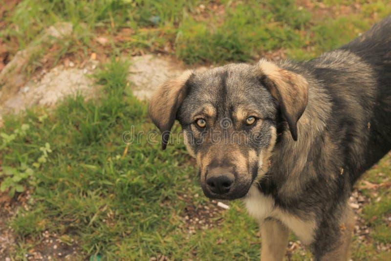 Cão abandonado fotos de stock royalty free