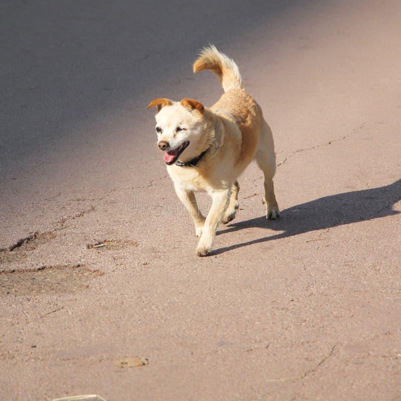 Cão abandonado foto de stock royalty free