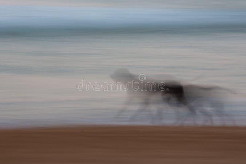 Cão abstrato que corre com movimento de filtração borrado fotografia de stock