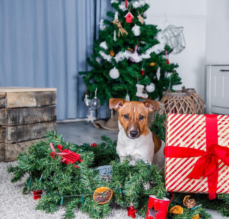 Cão adorável do Natal fotos de stock royalty free