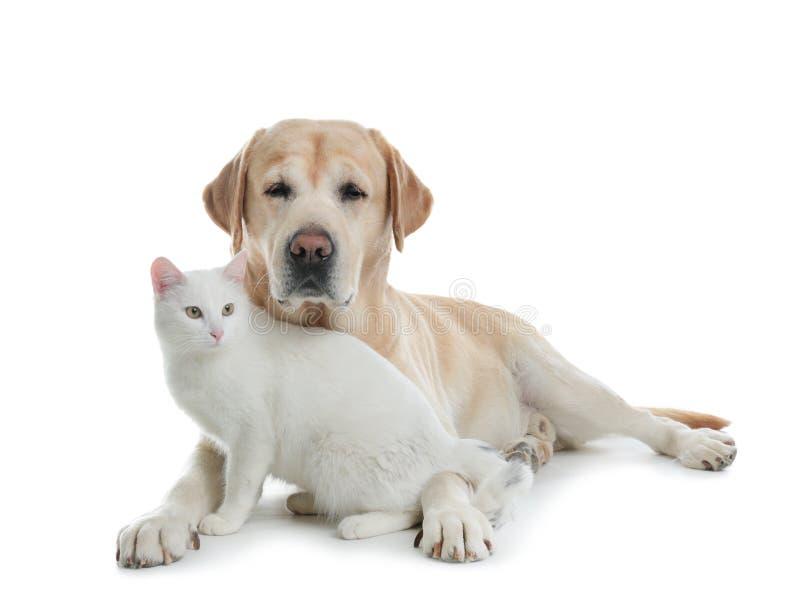 Cão adorável que olha na câmera e no gato junto Amigos para sempre foto de stock royalty free