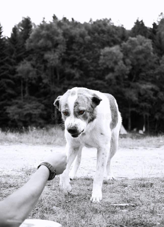 Cão agressivo imagem de stock royalty free