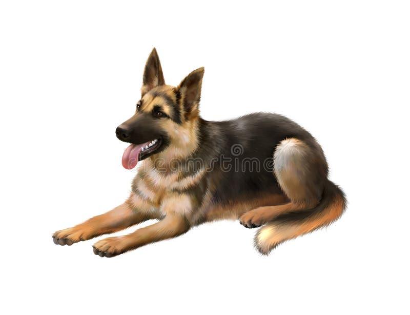 Cão alemão do shepard isolado no fundo branco foto de stock royalty free