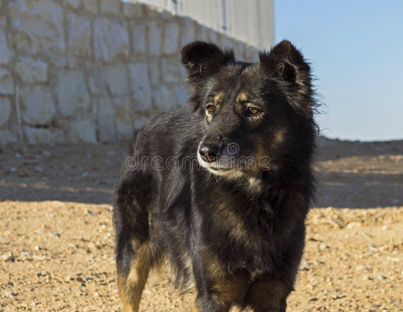 Cão alerta da exploração agrícola com Amber EyesAlert Farm Dog com Amber Eyes imagem de stock