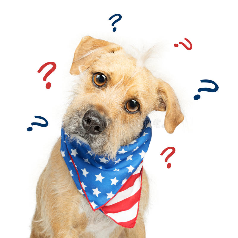 Cão americano político confuso imagens de stock