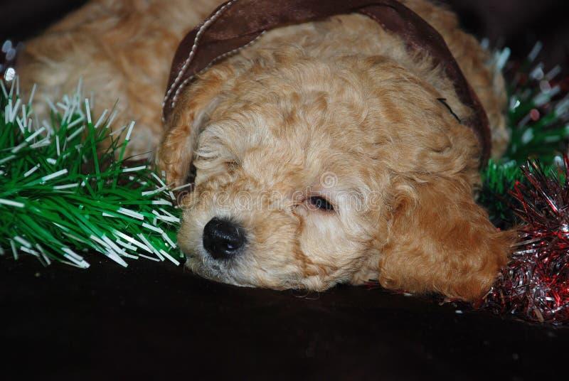 Cão, ano novo fotografia de stock