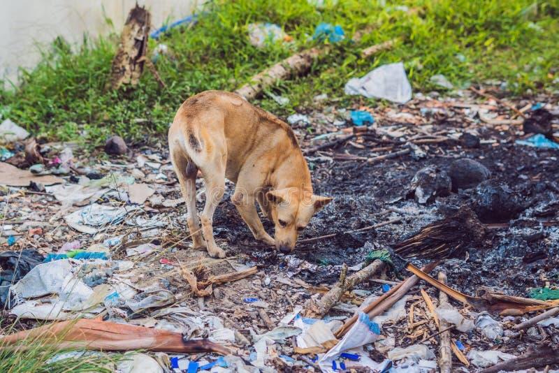 Cão ao lado do conceito dos animais da estática do lixo, poluição da rua do conceito do ambiente imagens de stock royalty free