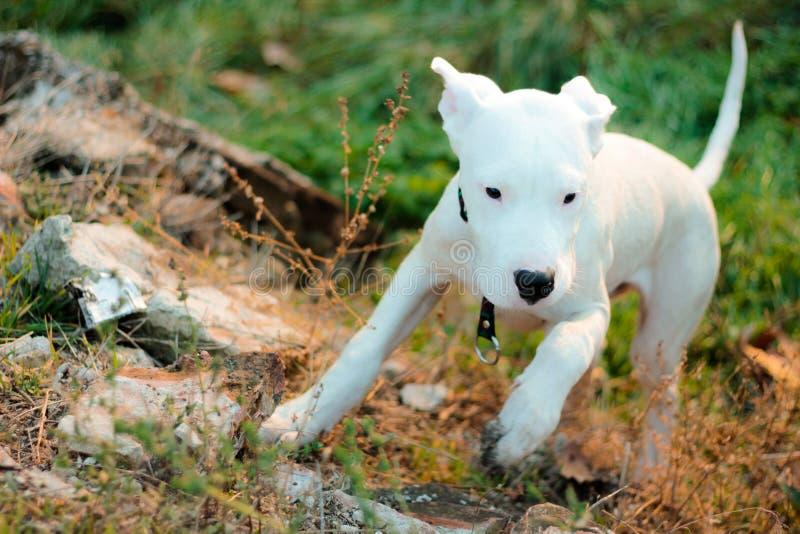 Cão ativo fotografia de stock