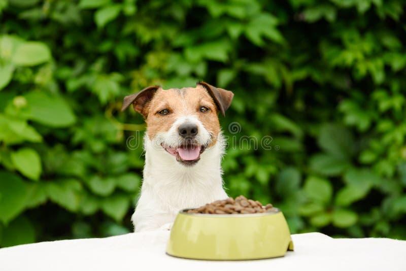 Cão atrás da tabela com a bacia completa do alimento seco fotografia de stock