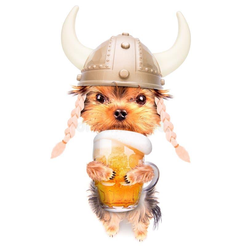 Cão bêbedo com cerveja fotografia de stock