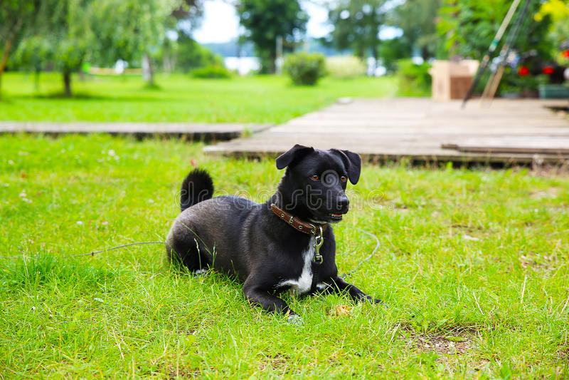 Cão bonito imagem de stock royalty free