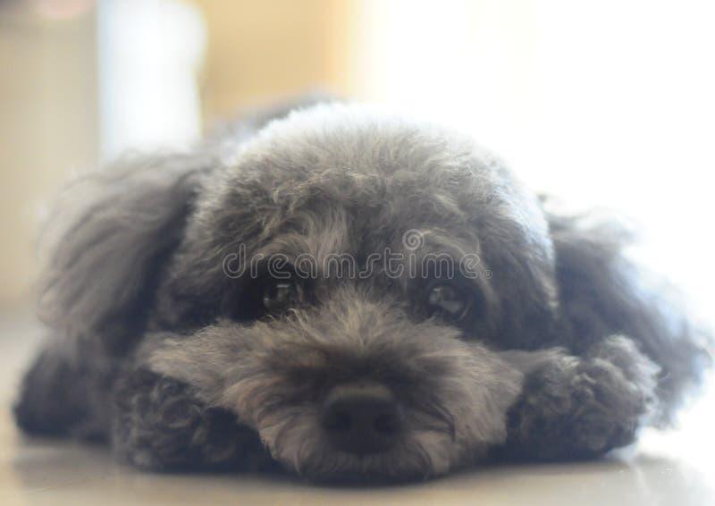 Cão bonito fotos de stock