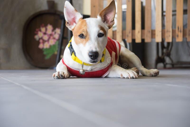 Cão bonito fotos de stock royalty free