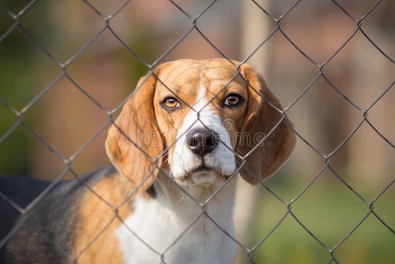 Cão bonito atrás da cerca fotos de stock royalty free