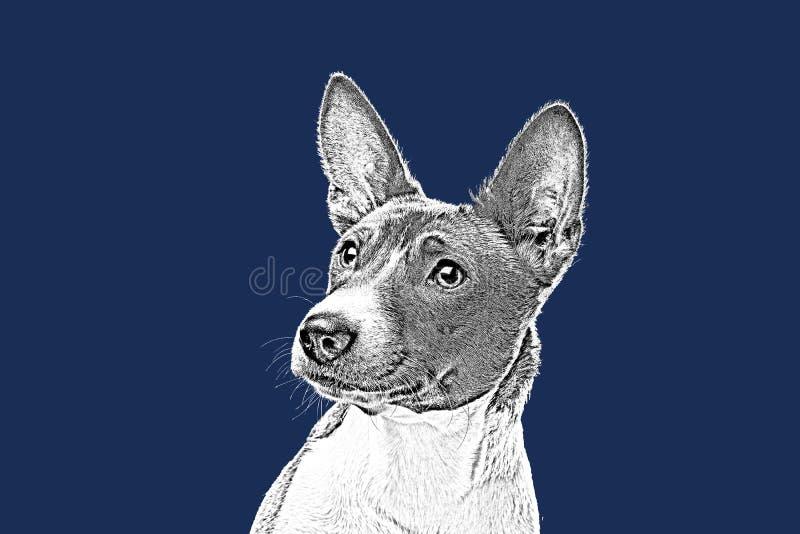 Cão bonito Basenji fotografia de stock royalty free