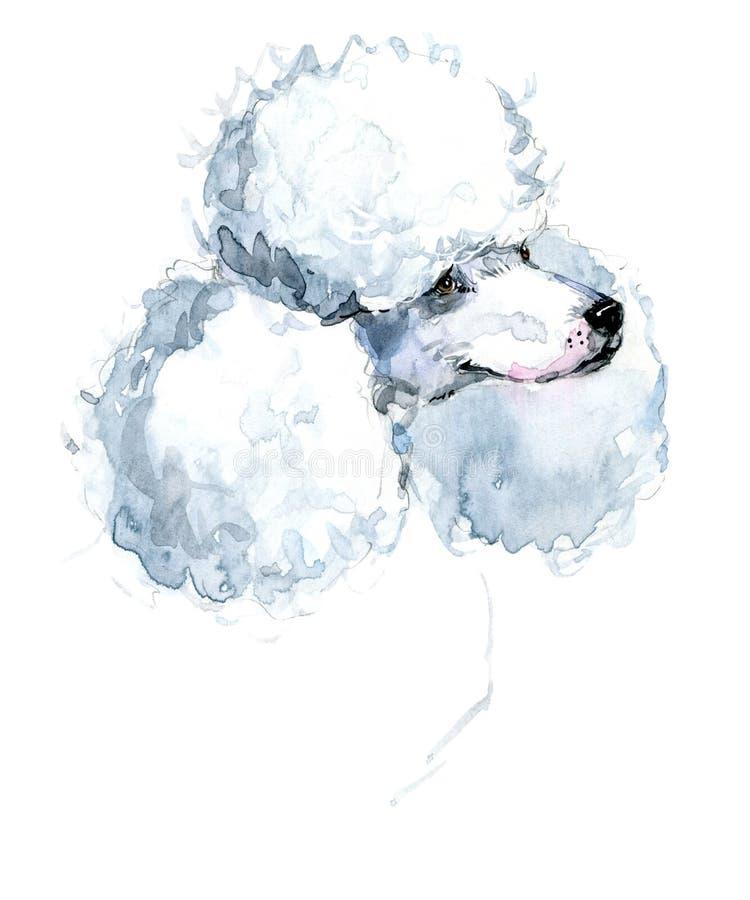 Cão bonito Cão da aquarela Raça do cão de caniche ilustração stock