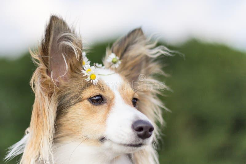 Cão bonito com as flores no cabelo imagens de stock royalty free