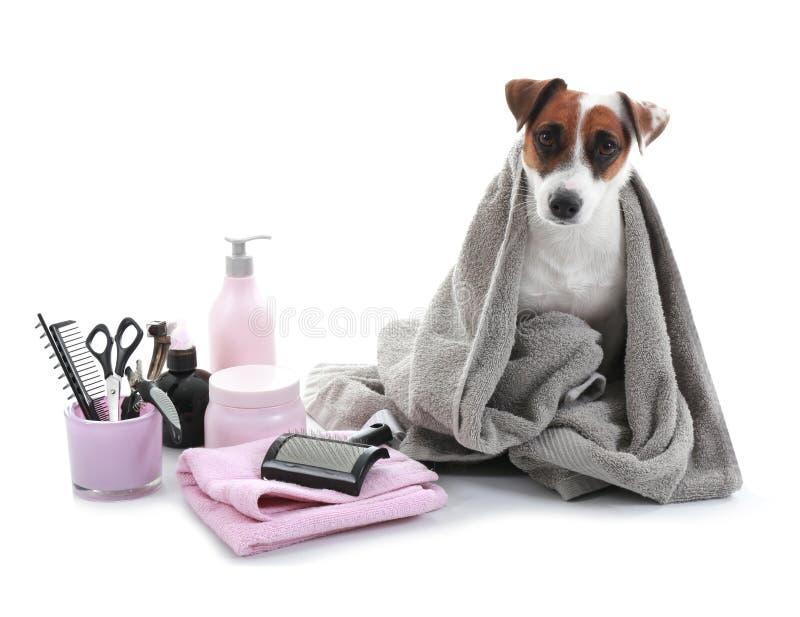Cão bonito com grupo para preparar no fundo branco fotografia de stock