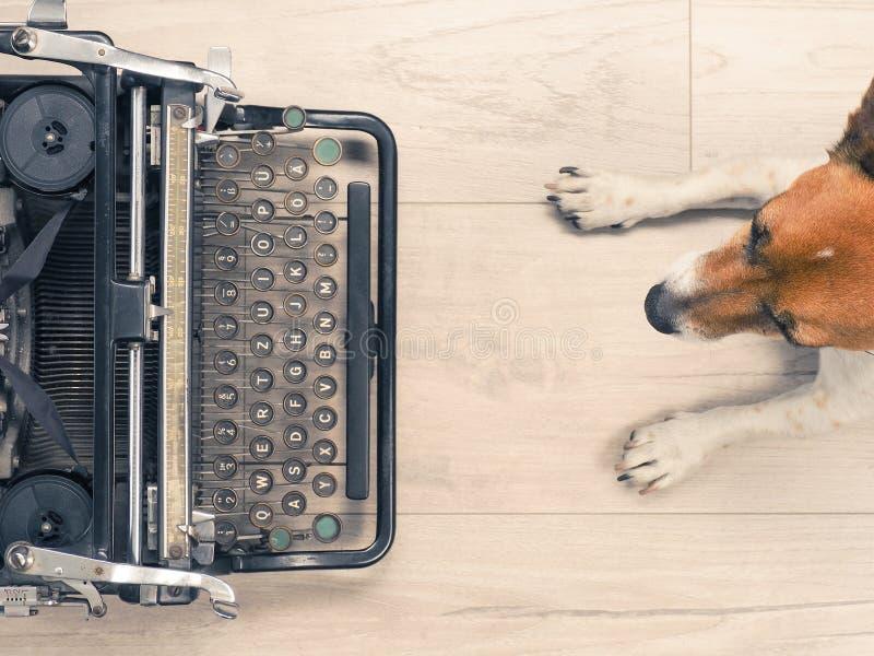 Cão bonito com uma máquina de escrever velha imagens de stock royalty free