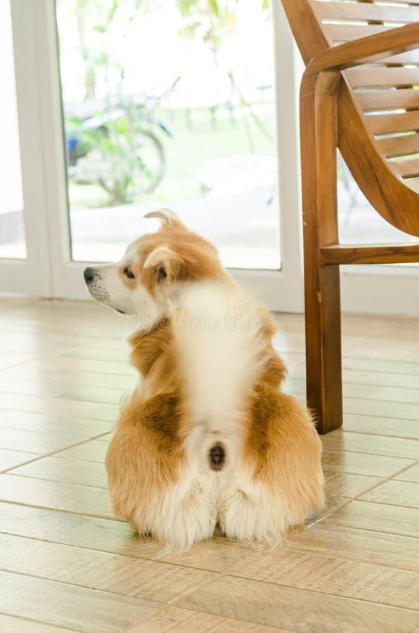 Cão bonito da parte traseira imagens de stock