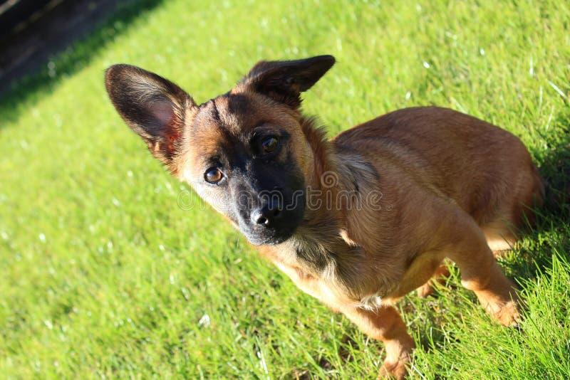 Cão bonito de Europa fotografia de stock royalty free