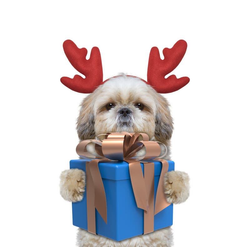 Cão bonito de Santa nos chifres da rena com o presente do ano novo foto de stock royalty free