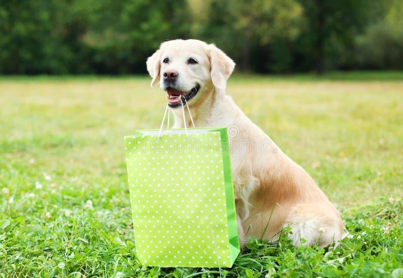 Cão bonito do golden retriever que guarda o saco de compras verde nos dentes na grama no verão foto de stock