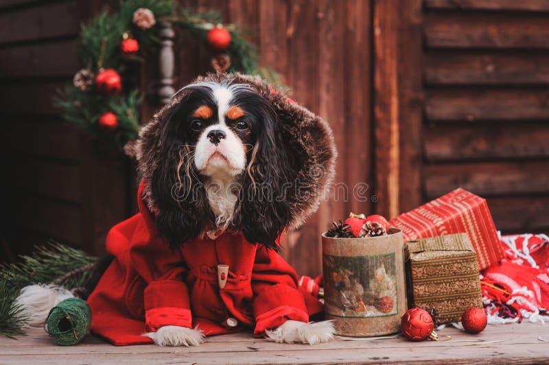 Cão bonito do Natal com presentes e decorações no fundo de madeira rústico imagem de stock royalty free
