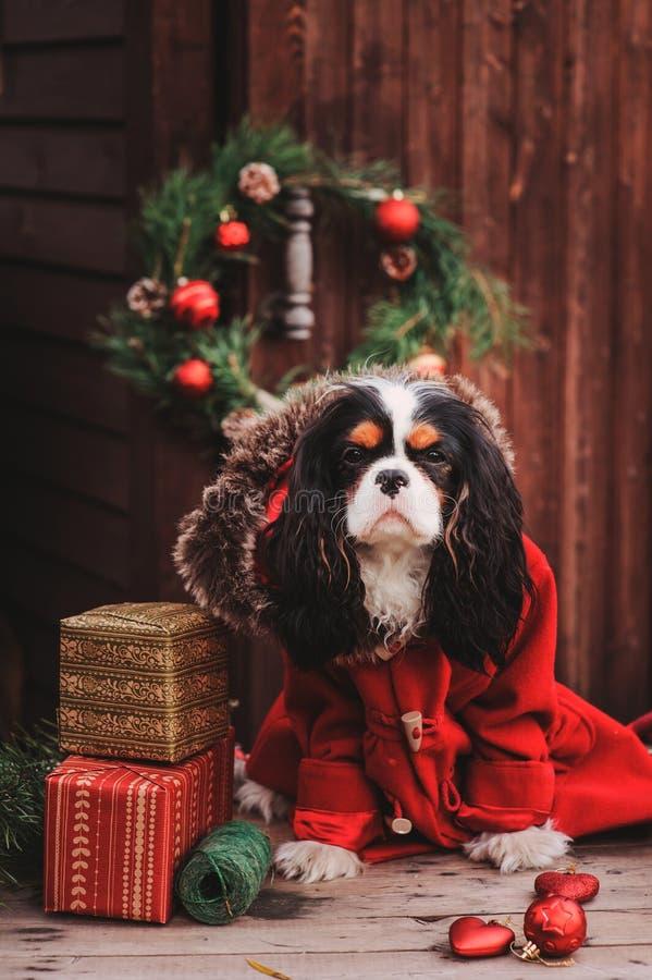 Cão bonito do Natal com presentes e decorações no fundo de madeira rústico foto de stock royalty free