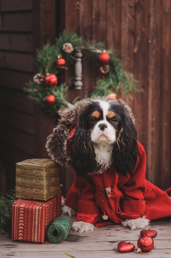 Cão bonito do Natal com presentes e decorações no fundo de madeira rústico fotografia de stock royalty free