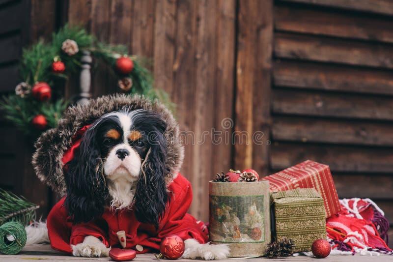 Cão bonito do Natal com presentes e decorações no fundo de madeira rústico imagens de stock