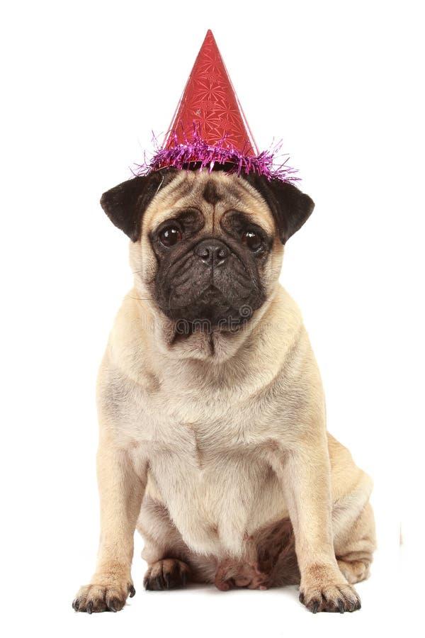 Cão bonito do Pug com o chapéu no fundo branco imagens de stock
