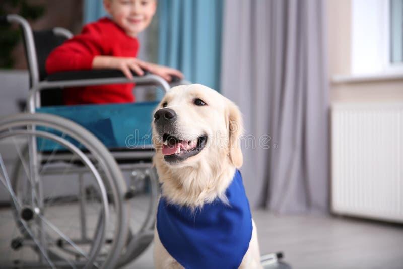 Cão bonito do serviço e menino borrado na cadeira de rodas imagem de stock